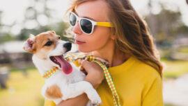 Six Dog Training Essentials